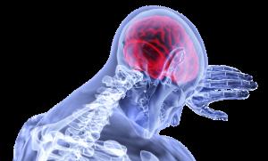 Hormonen in je hersenen