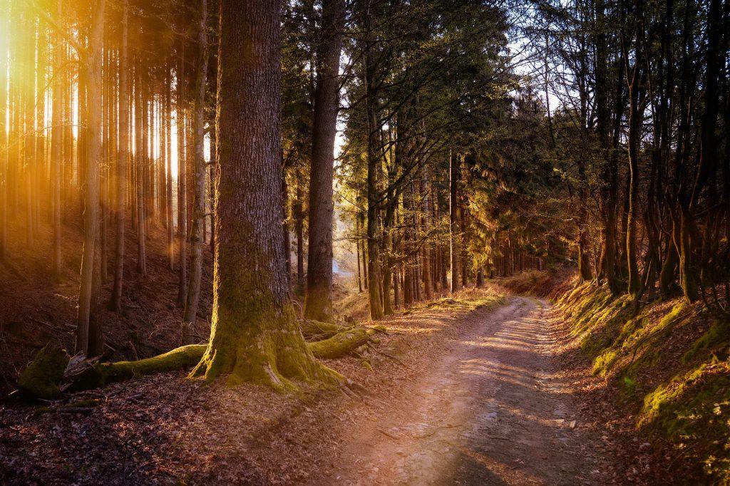 Angst-stress-wandelen