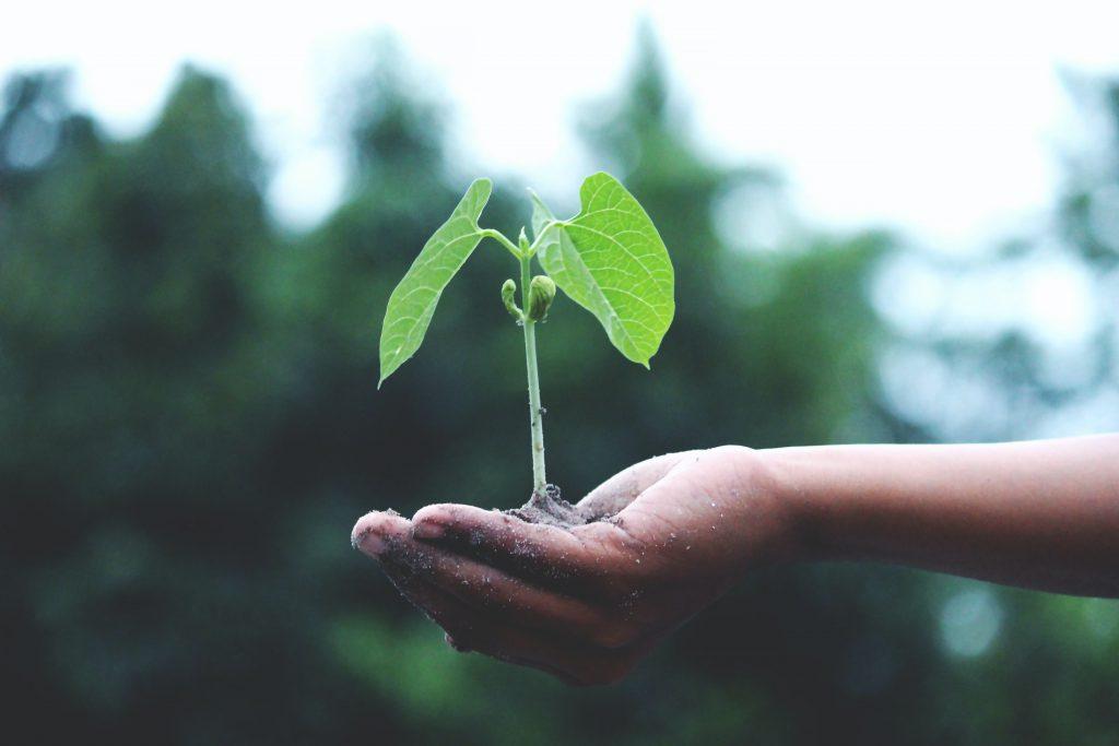 groei-mindset-groei